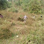Site clearing for new plantation creation, Samdrupjongkhar
