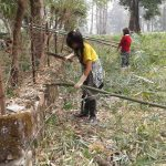 Bamboo collection for construction of nursery shed, Sarpang
